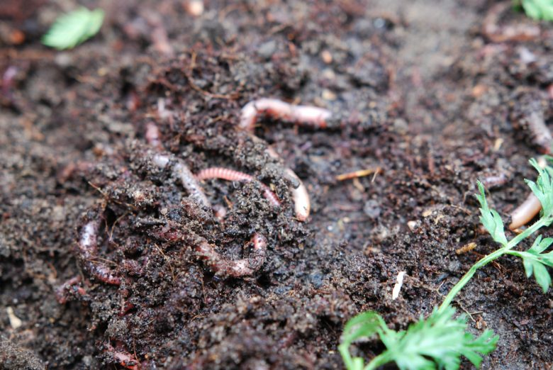 Building A Vermicompost