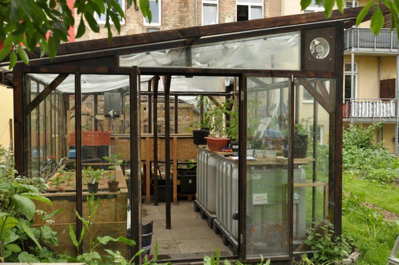 SOLVE Backyard Aquaponics; Fische im Hinterhof